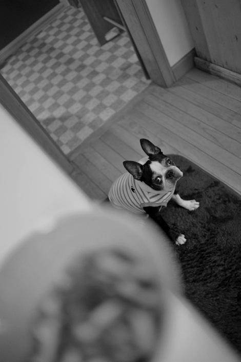 マツ犬とナツカシイ風景_b0133509_162218.jpg