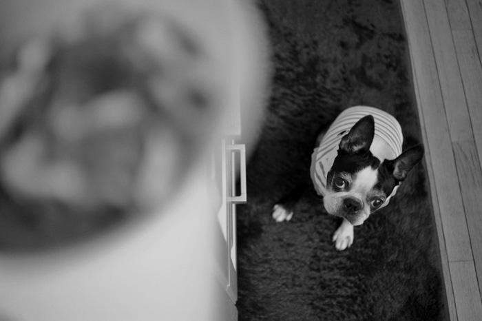 マツ犬とナツカシイ風景_b0133509_1624173.jpg