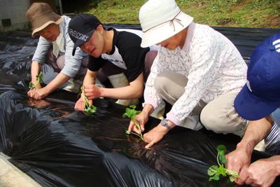 サツマイモの苗を植えました(^^)_a0154110_11213011.jpg