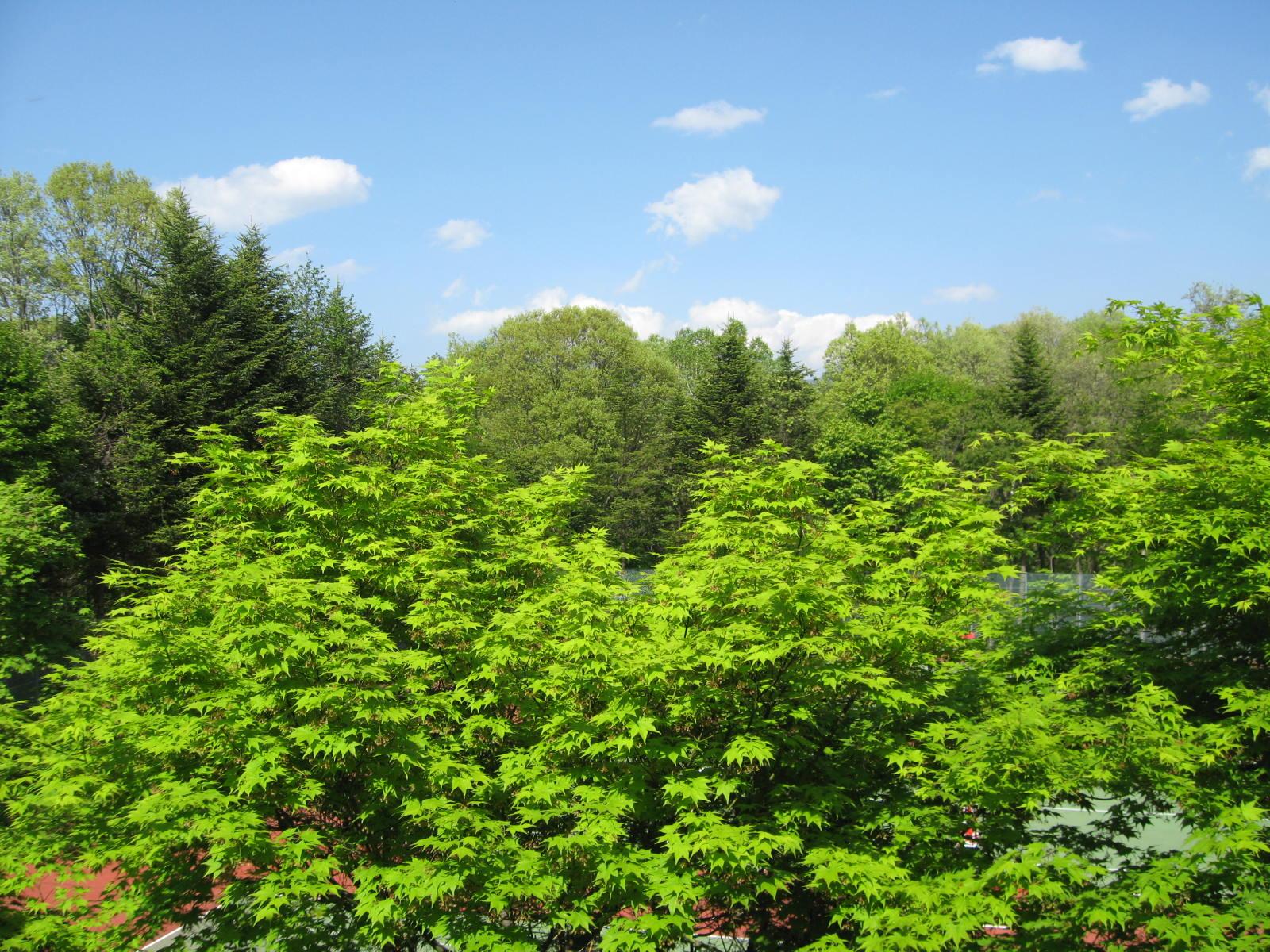 部屋の窓から…新緑体験!_f0146620_15275123.jpg