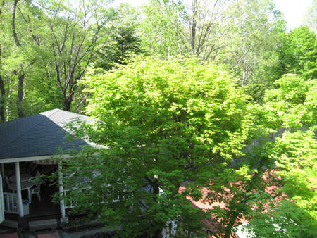 部屋の窓から…新緑体験!_f0146620_15294873.jpg