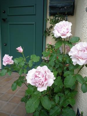 家のバラ・2_e0086738_23425211.jpg