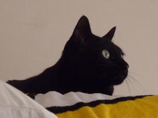 気がいい猫 のぇる編。_a0143140_23201820.jpg