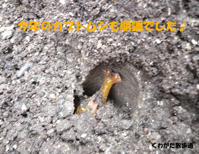 f0183484_21551477.jpg