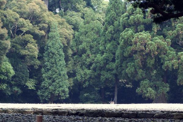 "\""gekuu_ise\"" The Shinto shrine_a0214416_7242826.jpg"