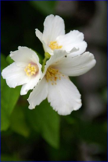 b0085917_2272128.jpg