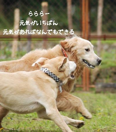 b0138824_16264136.jpg