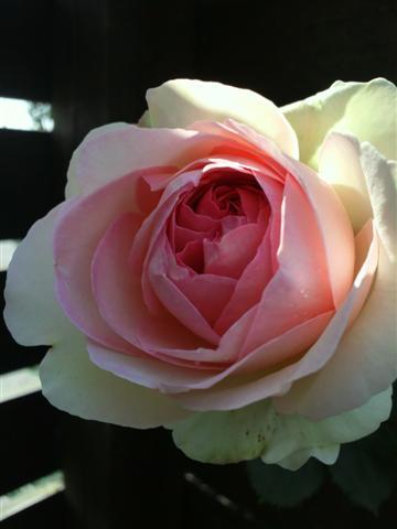 放置気味の庭_b0132338_11352372.jpg