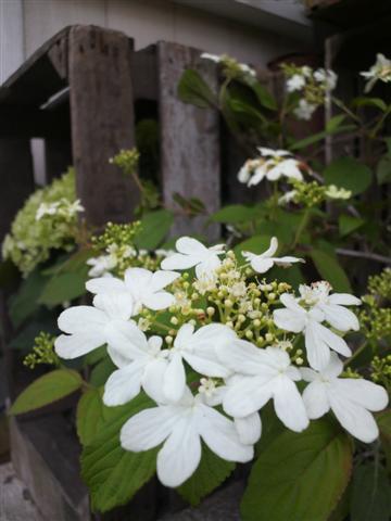 放置気味の庭_b0132338_22304870.jpg