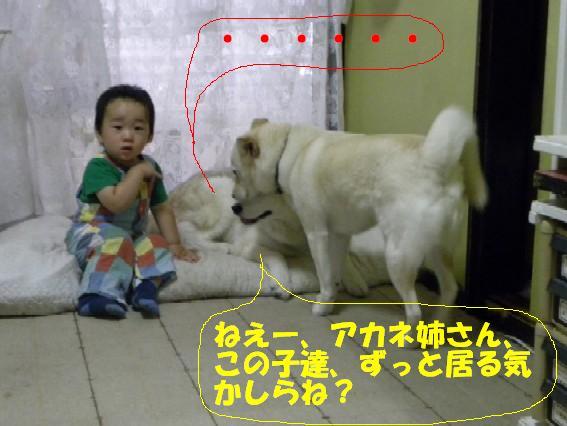 b0201756_1373170.jpg