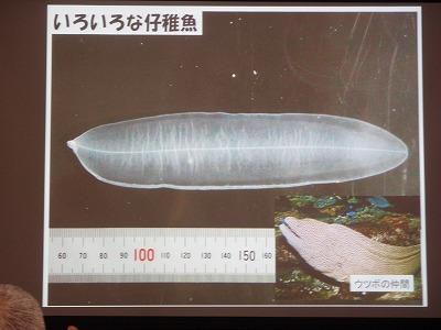 魚の赤ちゃんの世界_c0180460_186025.jpg