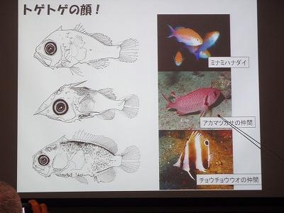 魚の赤ちゃんの世界_c0180460_1862080.jpg