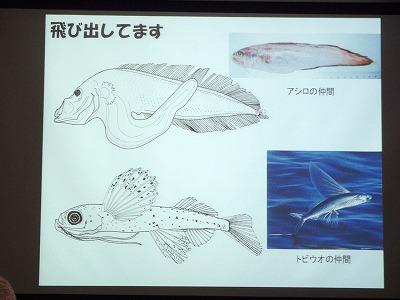 魚の赤ちゃんの世界_c0180460_1864483.jpg