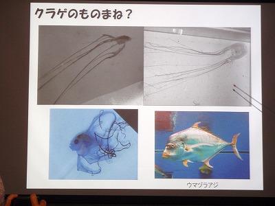 魚の赤ちゃんの世界_c0180460_1872384.jpg