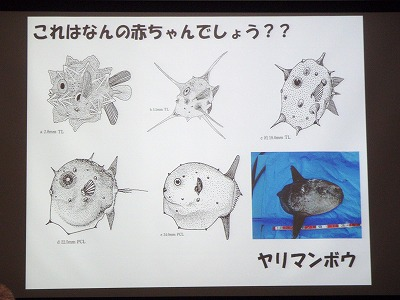 魚の赤ちゃんの世界_c0180460_1874136.jpg