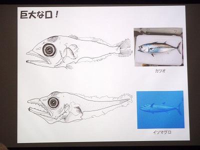 魚の赤ちゃんの世界_c0180460_187532.jpg