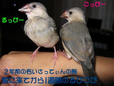 b0158061_222521.jpg