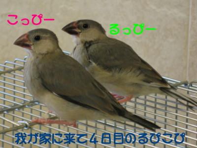 b0158061_2225927.jpg