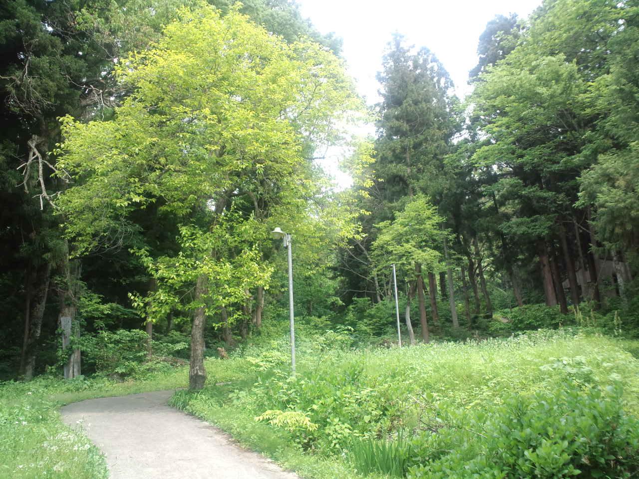 長野の山菜☆りぼんお散歩_c0151965_15293045.jpg