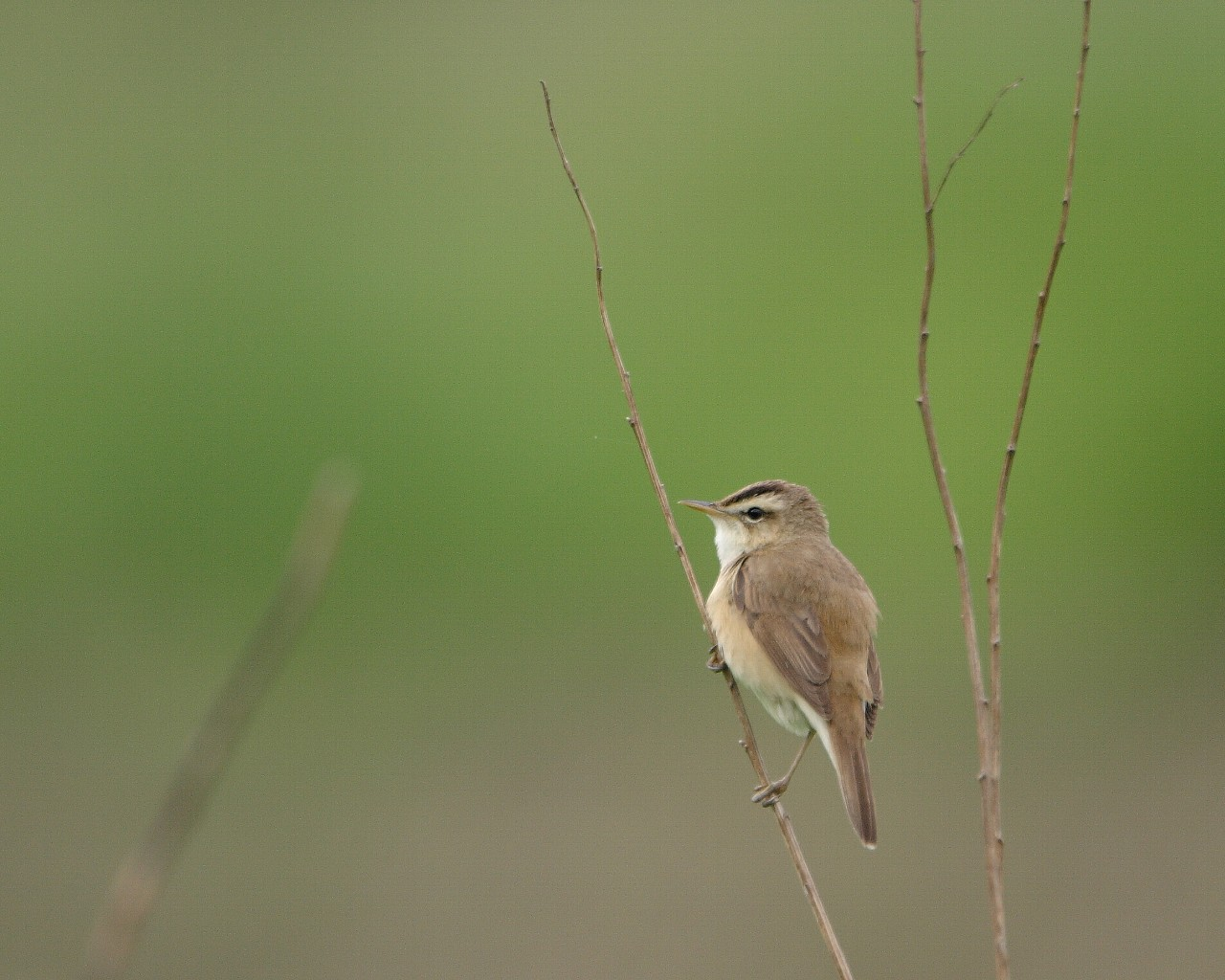 5年前の高原から(グリーンバックの美しい野鳥のフリー壁紙)_f0105570_21195687.jpg