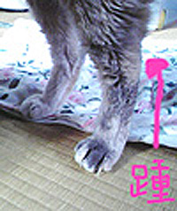 f0140271_1244749.jpg
