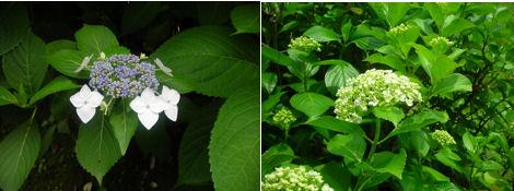 6月は紫陽花が綺麗な季節_d0183174_19283887.jpg