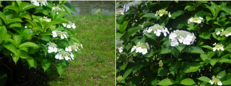 6月は紫陽花が綺麗な季節_d0183174_19284626.jpg
