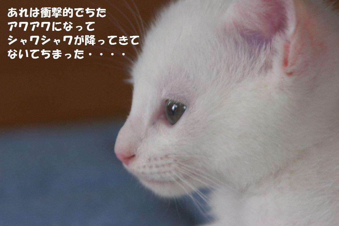 f0197682_23132925.jpg