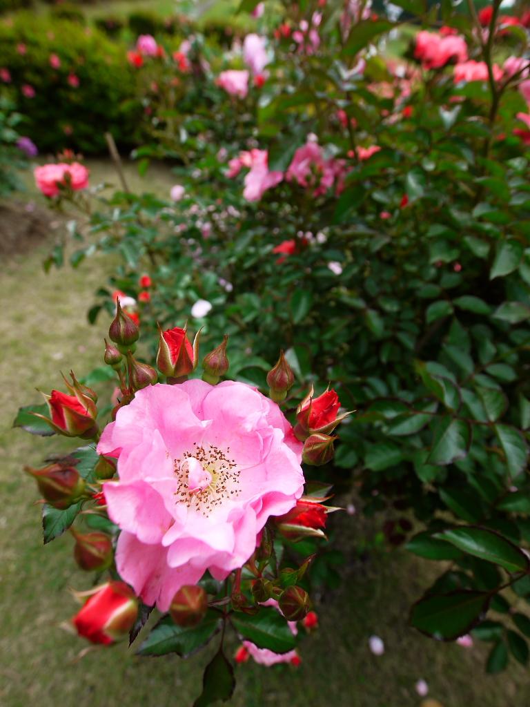 所沢航空記念公園 2_e0216133_0204552.jpg