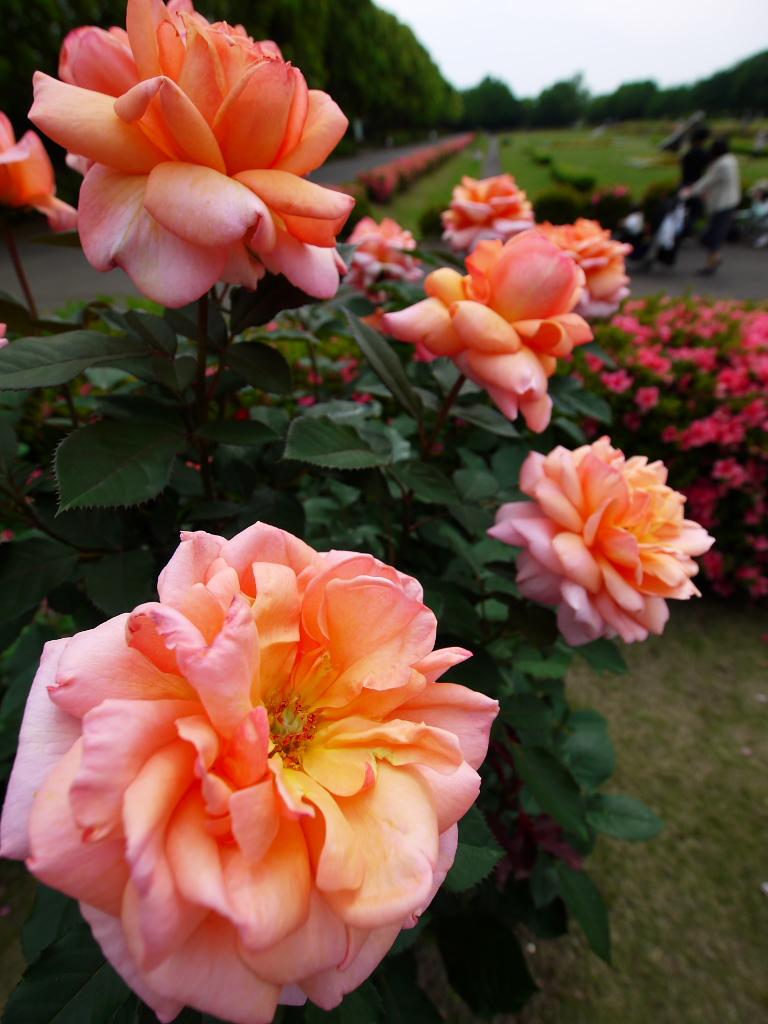 所沢航空記念公園 2_e0216133_0205433.jpg
