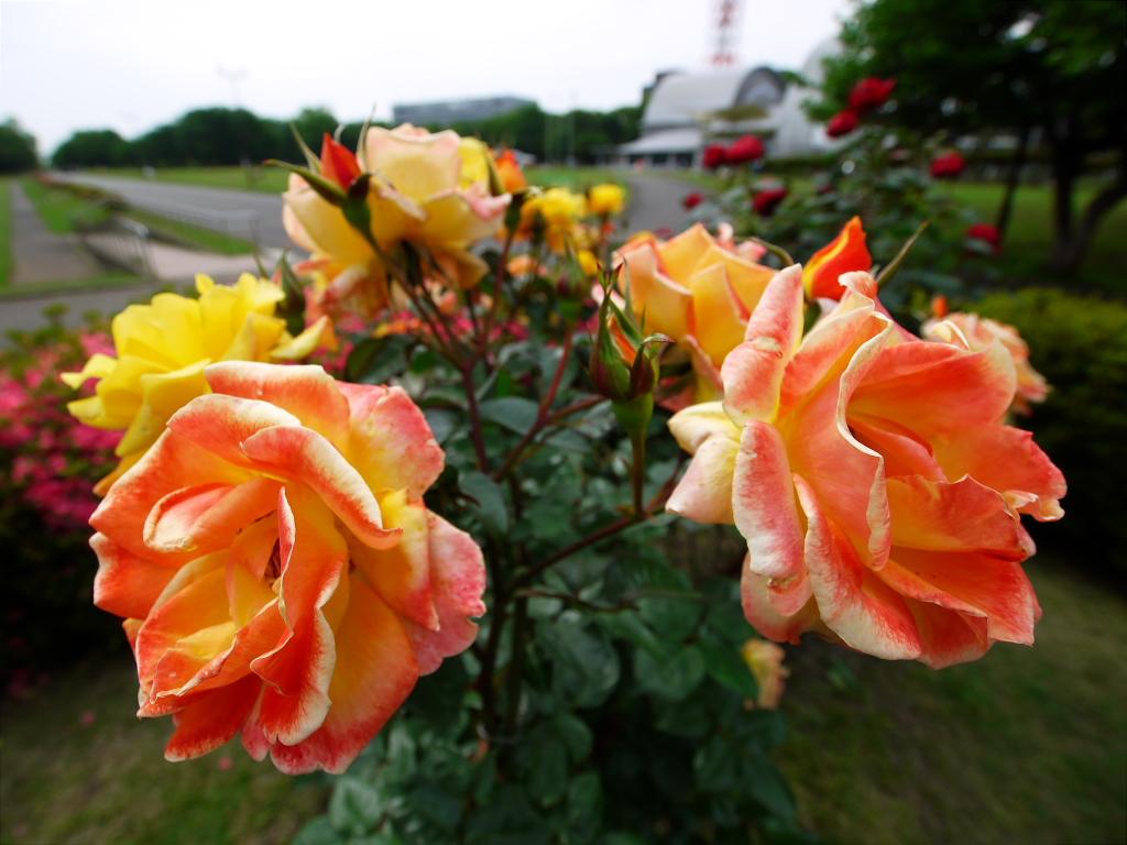 所沢航空記念公園 2_e0216133_0212943.jpg