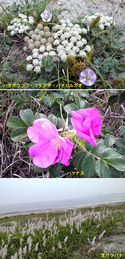 f0090738_11412688.jpg