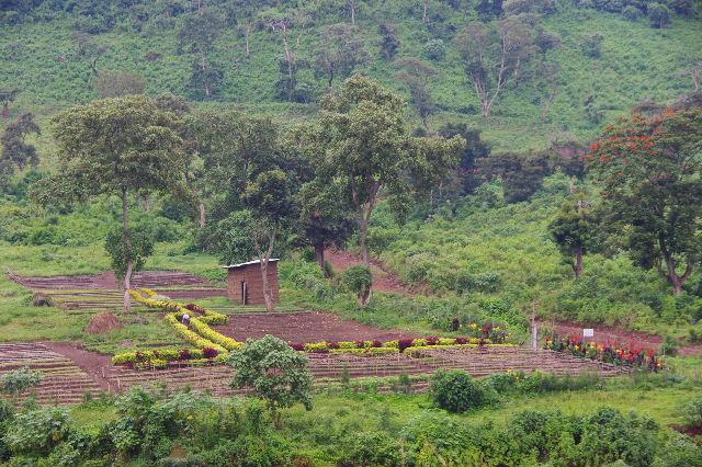 エチオピア(80) 朝のウォンドゲネット・リゾート近辺散策_c0011649_20201786.jpg