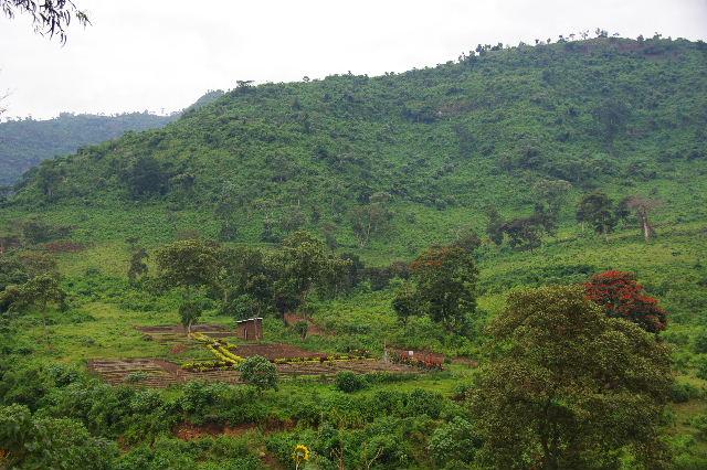 エチオピア(80) 朝のウォンドゲネット・リゾート近辺散策_c0011649_20214771.jpg