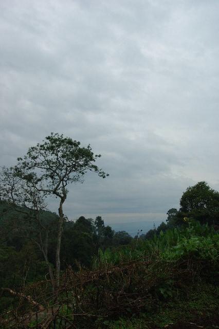 エチオピア(80) 朝のウォンドゲネット・リゾート近辺散策_c0011649_20221443.jpg