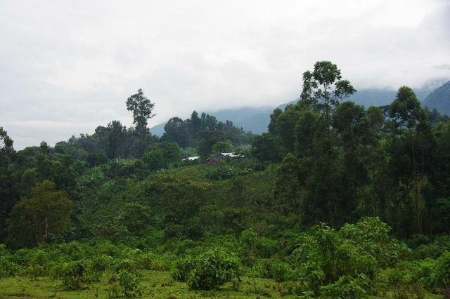 エチオピア(80) 朝のウォンドゲネット・リゾート近辺散策_c0011649_20303647.jpg