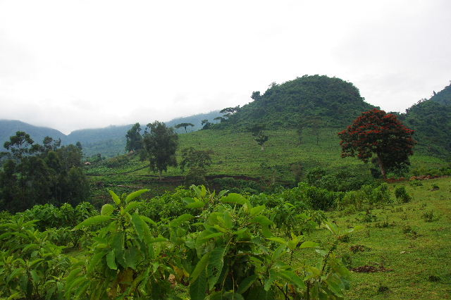 エチオピア(80) 朝のウォンドゲネット・リゾート近辺散策_c0011649_20305391.jpg