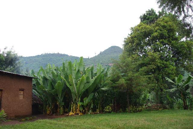 エチオピア(80) 朝のウォンドゲネット・リゾート近辺散策_c0011649_2051133.jpg