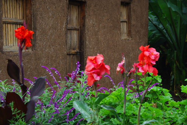 エチオピア(80) 朝のウォンドゲネット・リゾート近辺散策_c0011649_2081266.jpg