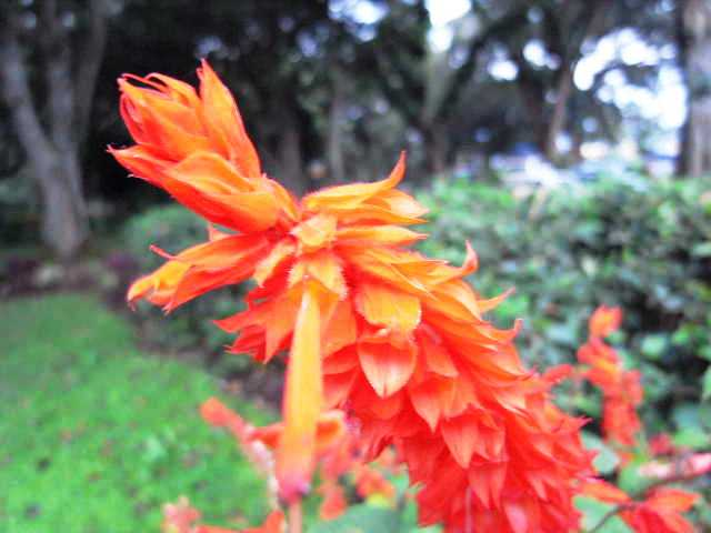 エチオピア(79) 朝のウォンドゲネット・リゾートと花々_c0011649_6481655.jpg