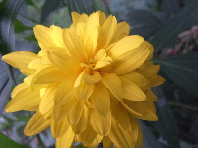 エチオピア(79) 朝のウォンドゲネット・リゾートと花々_c0011649_6491239.jpg
