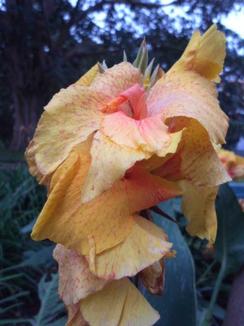 エチオピア(79) 朝のウォンドゲネット・リゾートと花々_c0011649_6511382.jpg