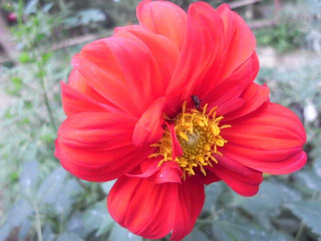エチオピア(79) 朝のウォンドゲネット・リゾートと花々_c0011649_6525814.jpg