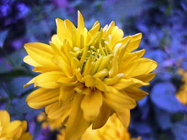エチオピア(79) 朝のウォンドゲネット・リゾートと花々_c0011649_6531854.jpg