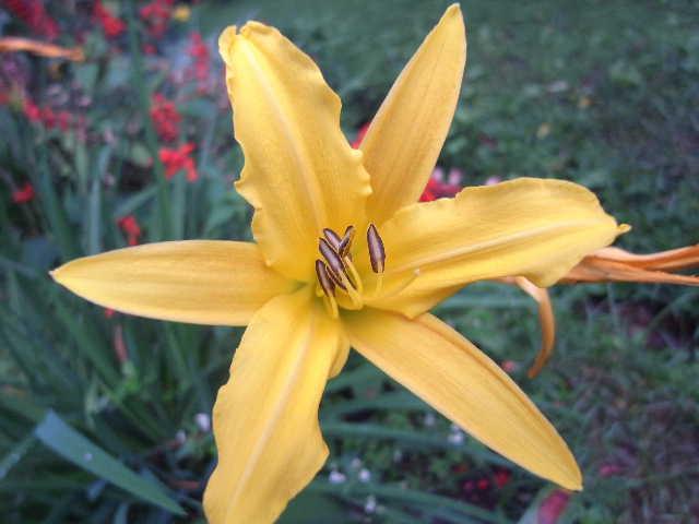 エチオピア(79) 朝のウォンドゲネット・リゾートと花々_c0011649_6534780.jpg