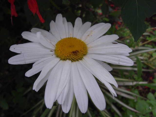 エチオピア(79) 朝のウォンドゲネット・リゾートと花々_c0011649_6545779.jpg