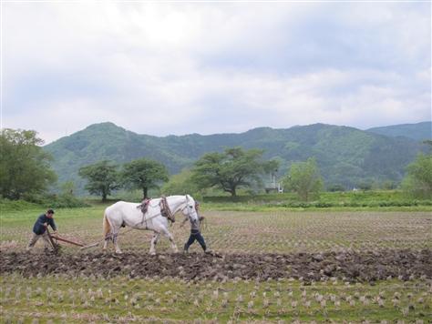 師匠の一人、見方さんは馬耕を昔からしていた経験があります見方さんの馬は今... フウドの日々暮ら