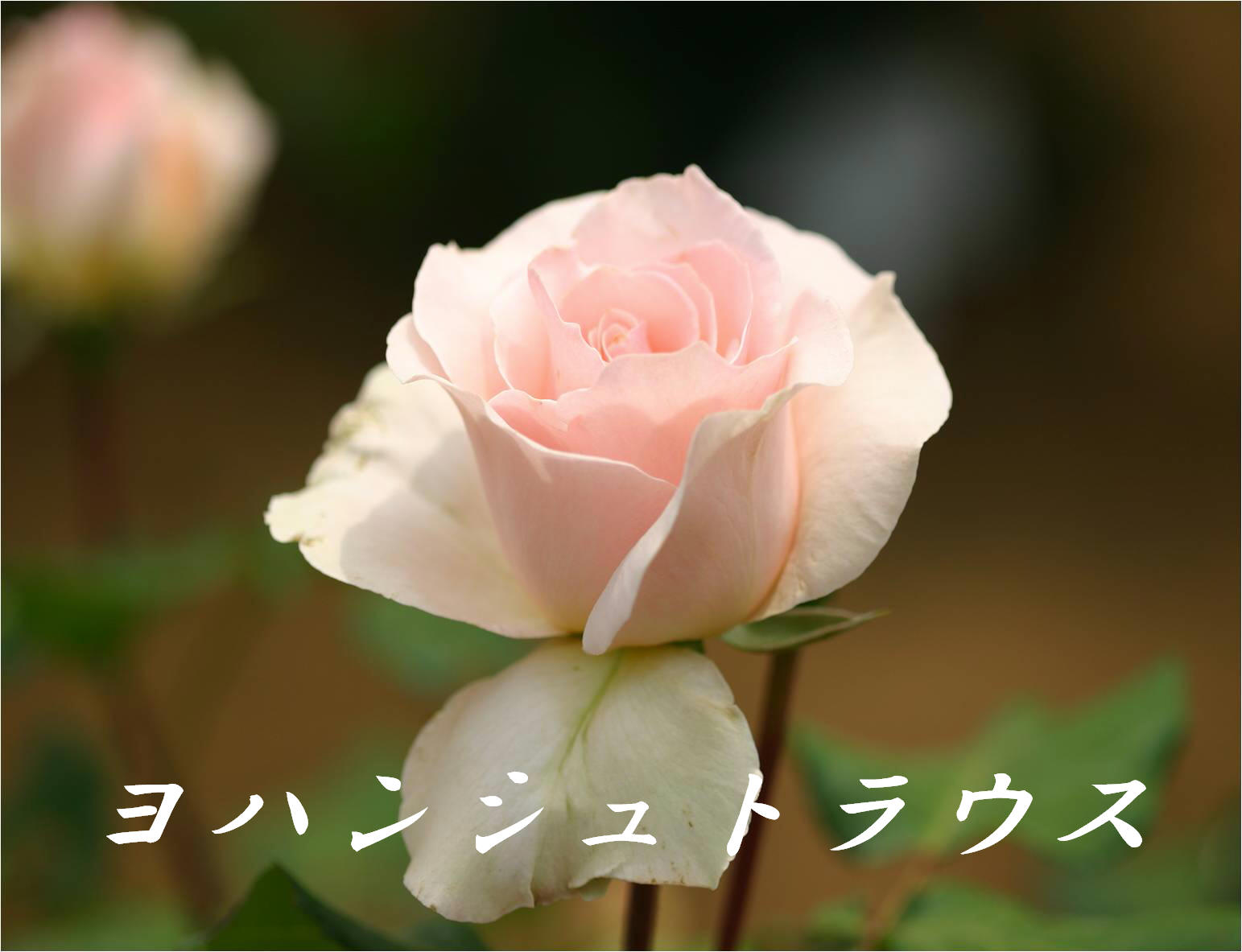 c0217255_18461245.jpg