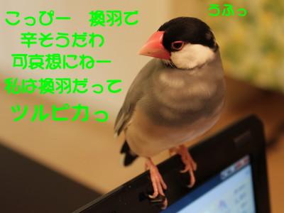 b0158061_21225575.jpg