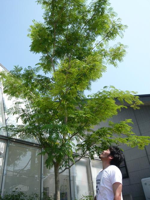 あたらしい樹を植えました!!_b0151262_22541121.jpg